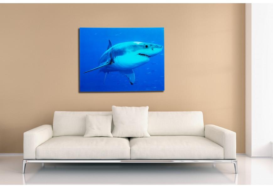 Štýlový obraz Žralok 60x80cm sklo