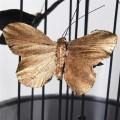 Dekoračný motýľ zlatej farby vo vnútri dizajnovej kupoly